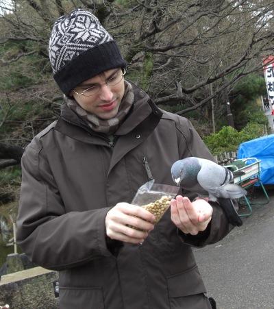 pigeons eating beans