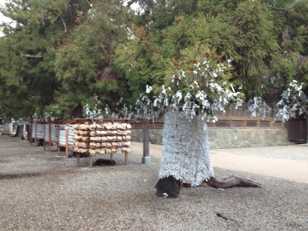 Enmusubi Tree